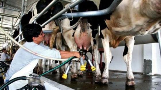 C. Torterolo: ''Queremos contribuir con el productor lechero'' — Lechería — Dinámica Rural   El Espectador 810