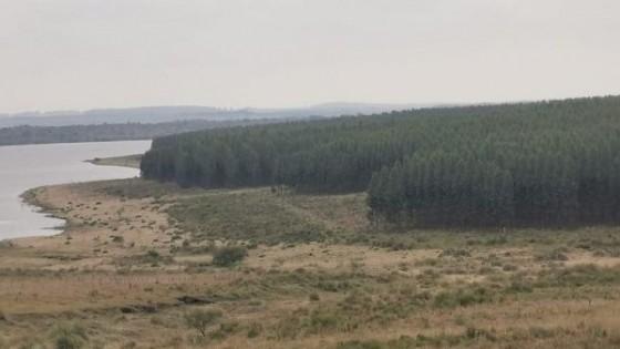 Forestación: Balance y perspectivas — Economía — Dinámica Rural   El Espectador 810