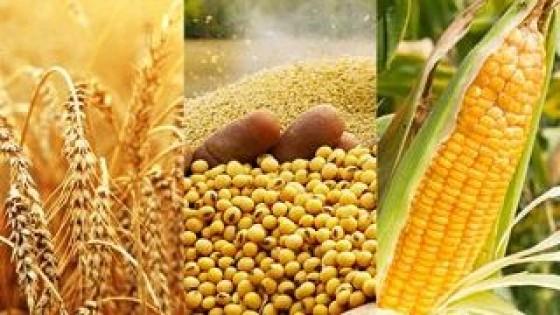 USDA recortó expectativas de rendimiento en soja, maíz y trigo  — Comercio Exterior — Dinámica Rural | El Espectador 810