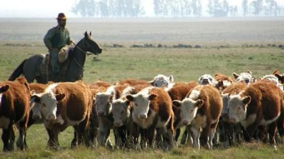 Alta demanda, faena sostenida y precios que tienden a estabilizarse — Mercados — Dinámica Rural   El Espectador 810