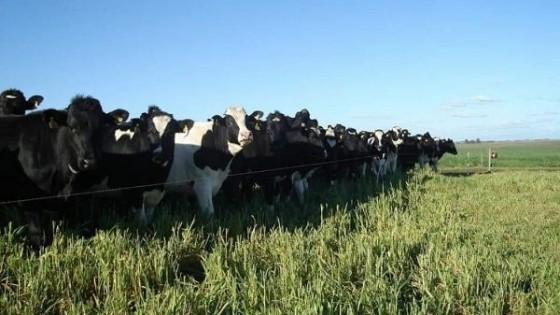 N. Cabrera: ''La Lista 10 es la esencia del productor lechero'' — gremiales — Dinámica Rural | El Espectador 810