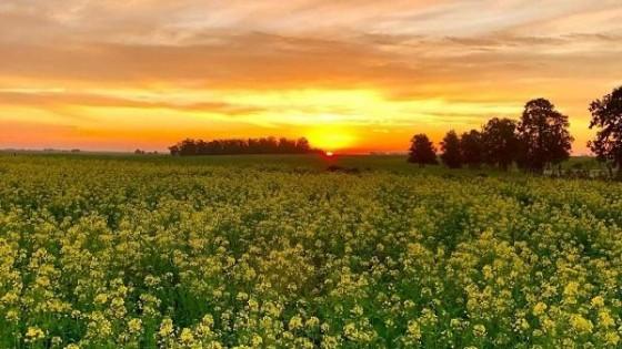 Hay buenas expectativas tanto en cultivos de invierno como de verano — Agricultura — Dinámica Rural | El Espectador 810