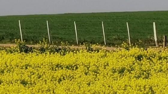 L. Simean: ''Mejoran los precios, aumentan los combustibles y los costos, por lo que hay que producir más'' — Agricultura — Dinámica Rural | El Espectador 810