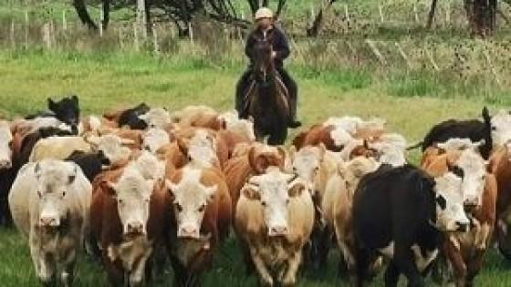 ''El novillo alcanza los 4.40  e incluso por encima'' — Mercados — Dinámica Rural   El Espectador 810