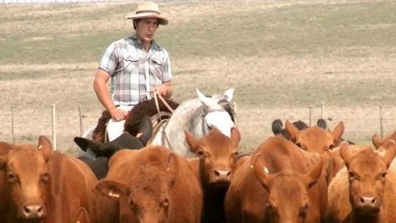 D. Claramunt: ' ''Las Bichas'' reúne lo que busca el productor, ganados comerciales y productivos' — Zafra — Dinámica Rural | El Espectador 810