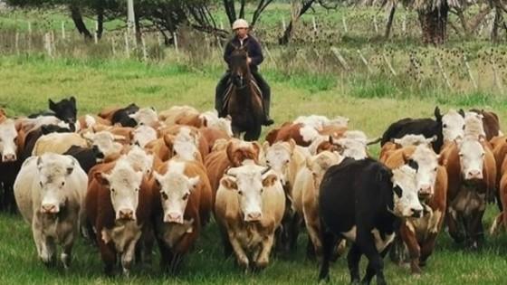 Pantalla Uruguay repone 10.805 vacunos en el mercado — Mercados — Dinámica Rural | El Espectador 810
