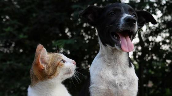 Hablemos de nuestras mascotas — El mostrador — Bien Igual | El Espectador 810