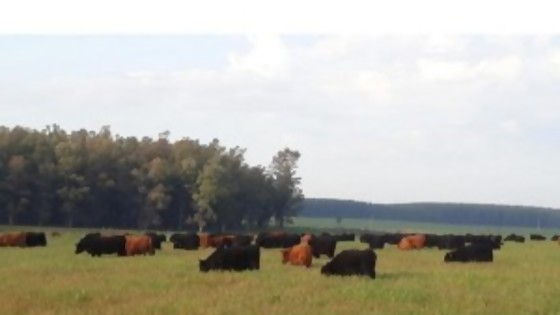El novillo gordo fluctúa etre 4 y 4,05 dólares — Ganadería — Dinámica Rural | El Espectador 810