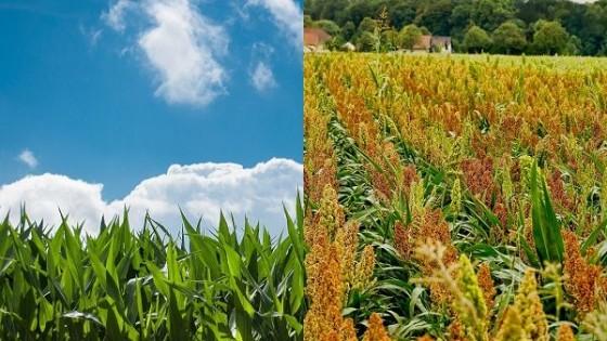 Prolesa impulsa portfolio de fertilizantes con interesantes plazos y meses de gracia  — Lechería — Dinámica Rural | El Espectador 810