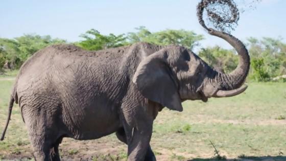 El hashtag del elefante — De qué te reís: Diego Bello — Más Temprano Que Tarde | El Espectador 810