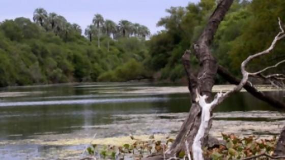 Cuidado y controles de los montes nativos — Qué tiene la tarde — Más Temprano Que Tarde | El Espectador 810