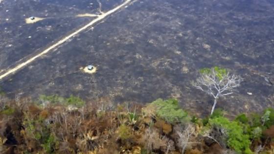 Amazonía: mucho humo y pocas nueces — GPS Activado — Más Temprano Que Tarde | El Espectador 810