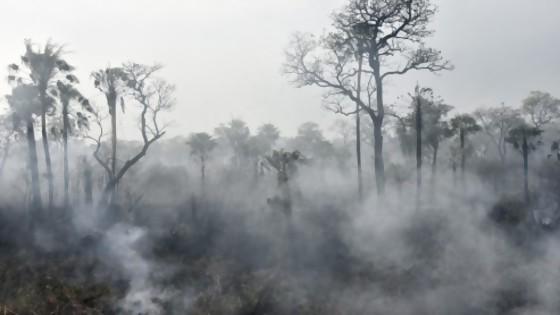 Ayuda de NatGeo a maestras: la Amazonia no es el pulmón del mundo — Audios — No Toquen Nada | El Espectador 810