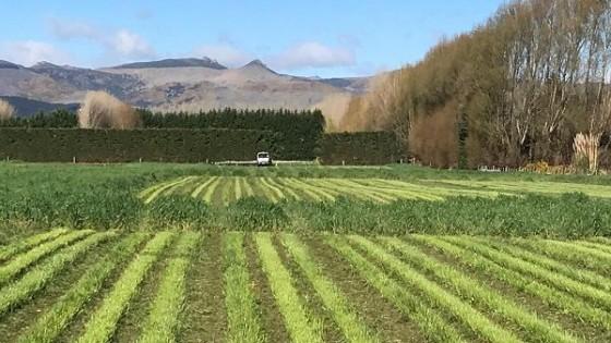 Nueva Zelanda, mitos y realidades del sistema pastoril — Ganadería — Dinámica Rural | El Espectador 810
