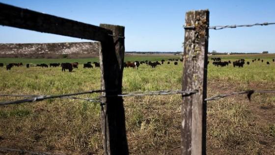 SUPRA: surge por la necesidad de hacer un buen uso del campo natural, por medio del manejo, que implica mejores resultados — Ganadería — Dinámica Rural | El Espectador 810