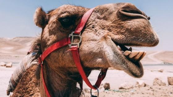 Dolor de Camello — De qué te reís: Diego Bello — Más Temprano Que Tarde | El Espectador 810