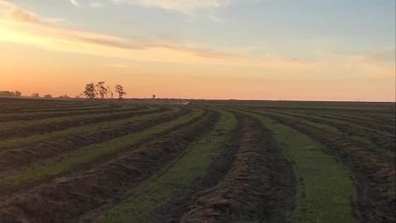 Dado la implantación tardía de arroz en algunas chacras, los rindes a un mes de la cosecha podrían estar en el entorno del 6% menos — Agricultura — Dinámica Rural | El Espectador 810