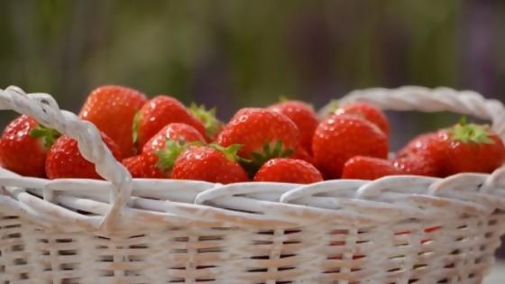 Alimentos salvajes: la tendencia alimenticia de agachar el lomo y buscar hongos, raíces — Gustavo Laborde — No Toquen Nada | El Espectador 810