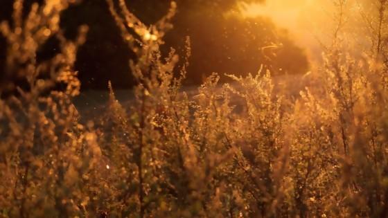¿Las madrastras y los padrastros dan alergia? — El mostrador — Bien Igual | El Espectador 810