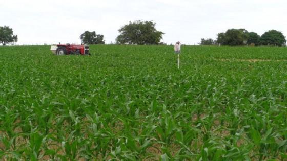 AgroFuturo apuesta desde hace 15 años a la sinergia entre ganadería y agricultura — Agricultura — Dinámica Rural | El Espectador 810