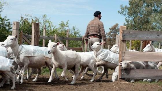Ovinos: En la primavera, es conveniente aplicar una sanidad preventiva — Ganadería — Dinámica Rural | El Espectador 810