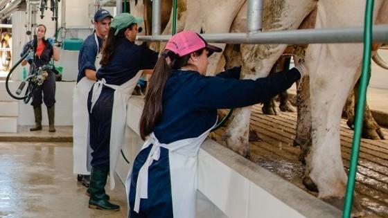 UTEC: 'La carrera Ciencia y Tecnología en el sector lácteo va en la línea de la profesionalización del sector' — Lechería — Dinámica Rural | El Espectador 810
