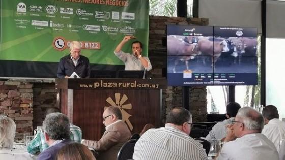 Primera jornada de PlazaRural marcó un 100% de ventas, con un promedio en terneros de 2,61 y un máximo de 3,35 dólares — Ganadería — Dinámica Rural | El Espectador 810