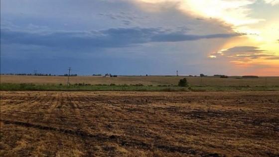 M. Estefanoli: 'en 2019 aumentaron los remates judiciales y extrajudiciales' — Economía — Dinámica Rural | El Espectador 810