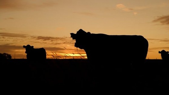 El novillo gordo cierra la semana en 3.50 dólares — Ganadería — Dinámica Rural | El Espectador 810