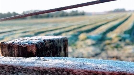 Seguridad Rural, tema excluyente para el próximo Gobierno — Economía — Dinámica Rural | El Espectador 810