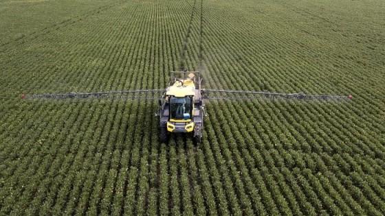 Soja: buena condición, tanto para las de primera como para las de segunda — Agricultura — Dinámica Rural | El Espectador 810