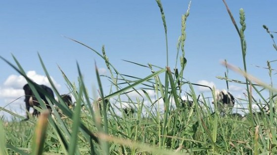 Lechería: China retomó las compras de ganado Holando y 'genera alivio' — Ganadería — Dinámica Rural | El Espectador 810