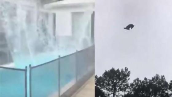 El cordero en la piscina y la crítica a Lacalle por la llegada de argentinos — Columna de Darwin — No Toquen Nada | El Espectador 810