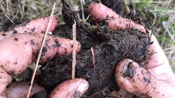 Biocenosis: La evolución del suelo, desde inicio hasta el climax — Ganadería — Dinámica Rural | El Espectador 810