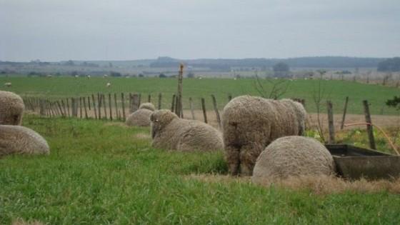 La genética de 'La Lucha' posiciona al doble propósito — Ganadería — Dinámica Rural | El Espectador 810