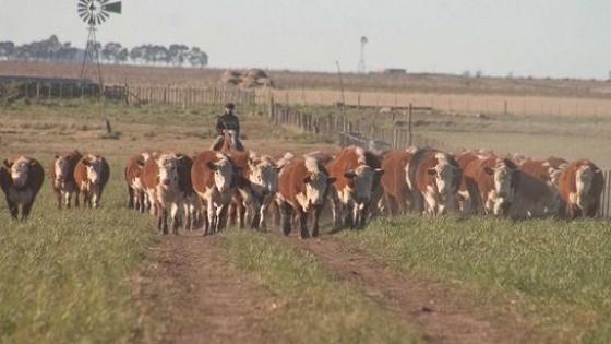 Indicador: El novillo gordo se mueve en el eje de los 3.45 dól/kg en promedio — Ganadería — Dinámica Rural | El Espectador 810