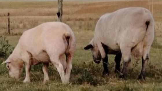 'María Inés': con el objetivo de producir más carne — Ganadería — Dinámica Rural | El Espectador 810