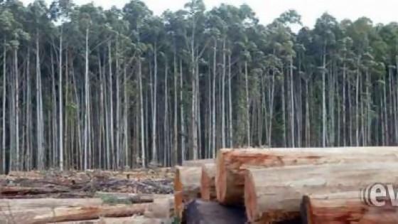 El Movimiento por un Uruguay Sustentable presenta un informe sobre forestación — Qué tiene la tarde — Más Temprano Que Tarde | El Espectador 810