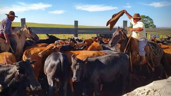 Los precios en el mercado de haciendas se estabilizan y generan alivio — Ganadería — Dinámica Rural | El Espectador 810