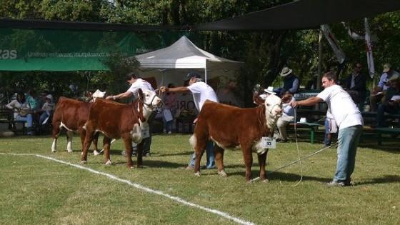 Con lo que más promete de cada cabaña, se pone en marcha Expo Durazno — Ganadería — Dinámica Rural | El Espectador 810