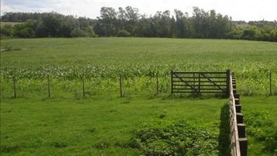Inmuebles rurales: Hay consultas, pero pocos negocios dado el contexto mundial — Economía — Dinámica Rural | El Espectador 810