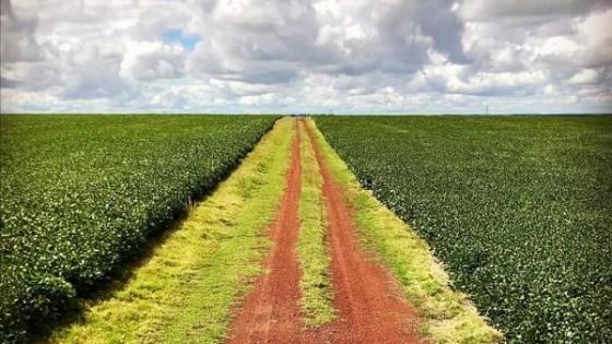 La soja podría tener rindes promedio en la zona núcleo del orden de los 2.700 kilos por há — Agricultura — Dinámica Rural | El Espectador 810