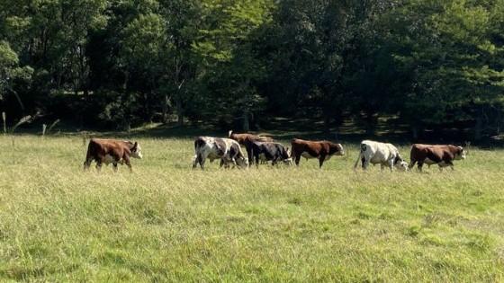 Campo Natural: Una alternativa eficiente y que, para la investigación, puede ser mejor utilizada — Ganadería — Dinámica Rural | El Espectador 810