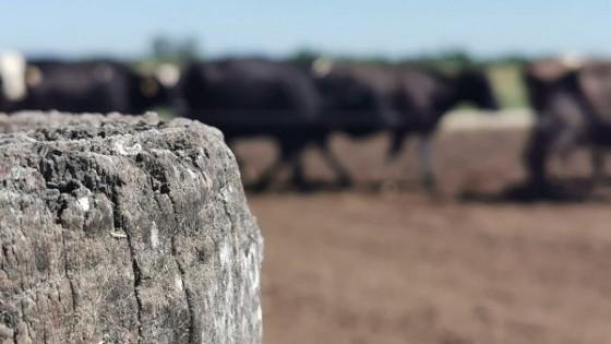 La lechería 'busca recomponerse con medidas de fondo' — Lechería — Dinámica Rural | El Espectador 810