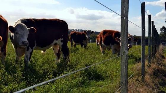 En Flores: Licitación de campo agrícola ganadero generó una renta de 123 dól/há — Economía — Dinámica Rural | El Espectador 810