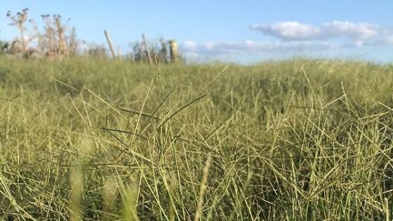 Columna: Maleza o plantas indicadoras, es el tema que abordaremos con la Ing. Agr. Lucía Bauer, de GrouAgro — Ganadería — Dinámica Rural | El Espectador 810