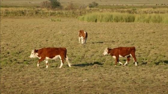 Recomendaciones técnicas para el otoño — Ganadería — Dinámica Rural | El Espectador 810