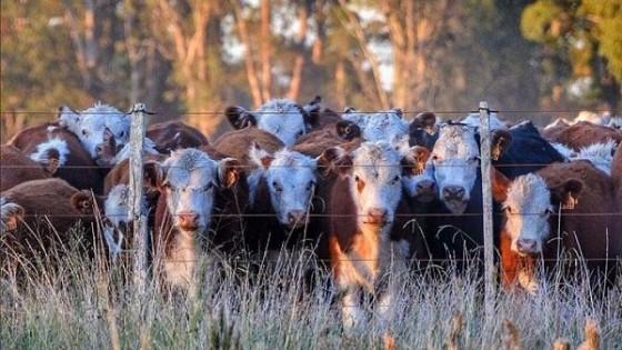 Pantalla Uruguay: Un remate diferente, con alta colocación, ágil y solidario — Ganadería — Dinámica Rural | El Espectador 810
