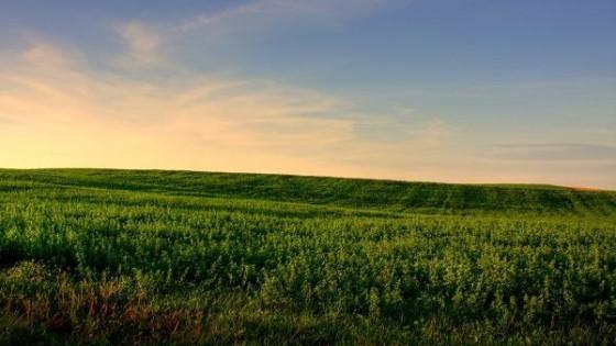 Campo natural: gestión del pasto, para gestionar el riesgo — Ganadería — Dinámica Rural | El Espectador 810