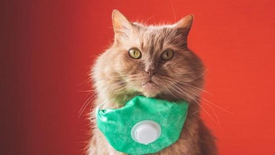 La gata sin tapaboca — De qué te reís: Diego Bello — Más Temprano Que Tarde | El Espectador 810